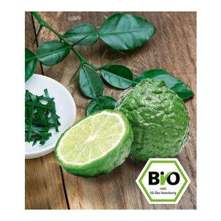 BIO-Kaffir-Limette 1 Pflanze Citrus hystrix Kaffernlimette