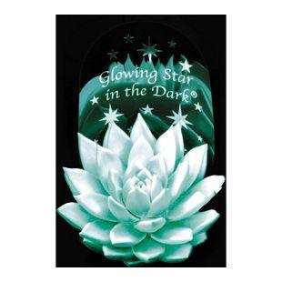 Glowing Star in the Dark®, 1 Pflanze