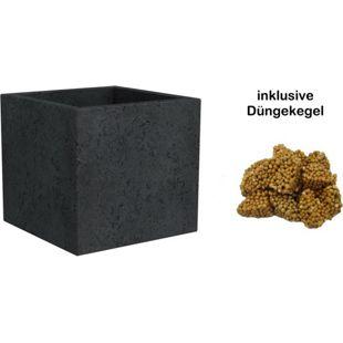 Scheurich C-Cube 29x29x27 cm, stony black, inklusive 4 Düngekegel