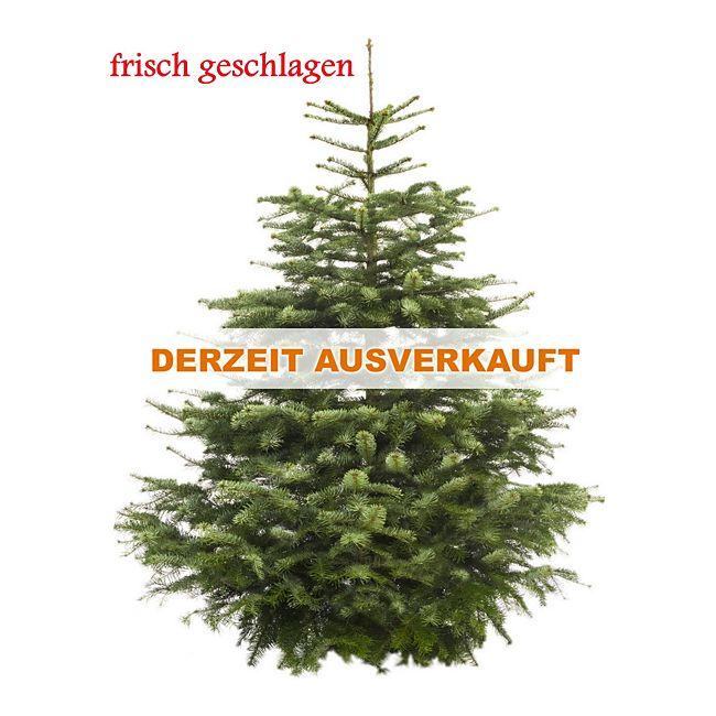 dominik gartenparadies echter weihnachtsbaum nordmanntanne premium 175 200 cm geschlagen. Black Bedroom Furniture Sets. Home Design Ideas