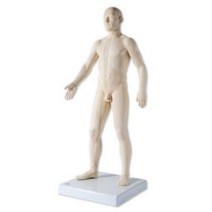 3B Scientific Akupunktur-Figur, männlich N30 - Bild 1