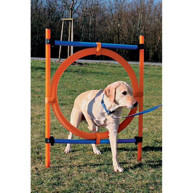 Dog - Agility - Ring - Bild 1