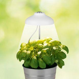 MAXXMEE LED-Pflanzenleuchte mit Teleskopstab 5W weiß höhenverstellbar - Bild 1