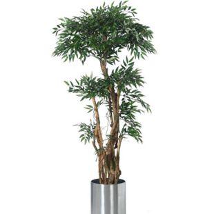 Tropischer Ruscus Tropischer Ruscus Grün - Bild 1
