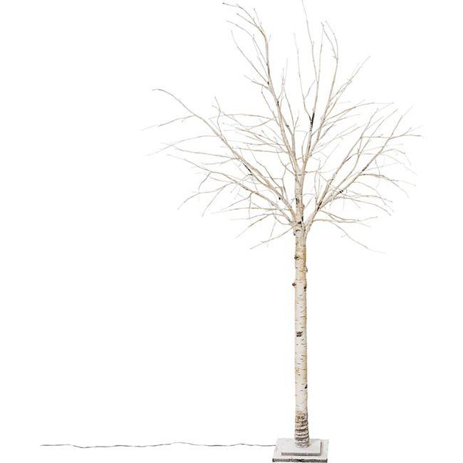 LED-Birke Crema Weiß - Bild 1
